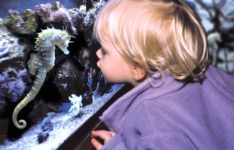 Sea Life Königswinter In Königswinter Mobile Gutscheinede